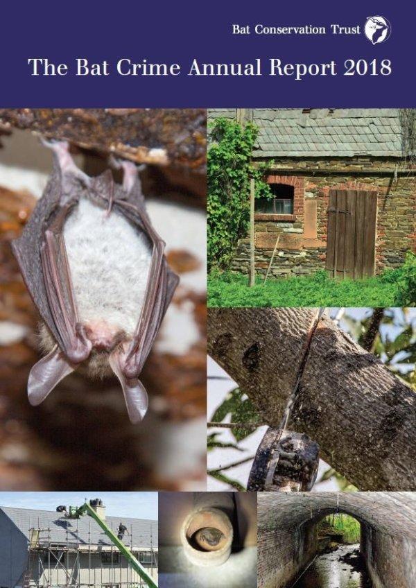 Bat Crime Report released
