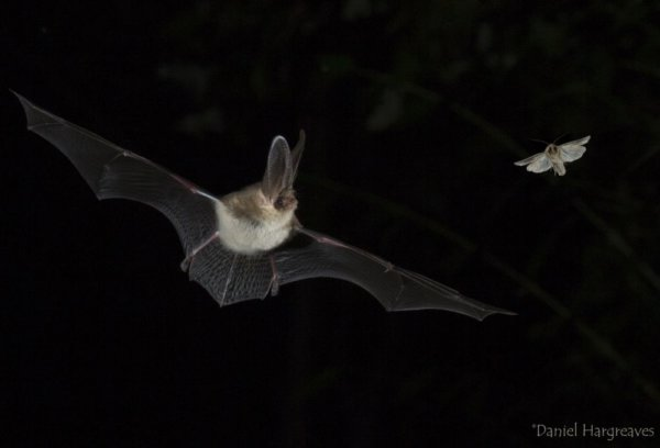 New Guidance on bats and lighting