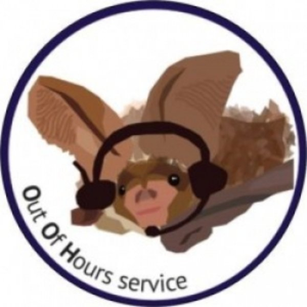 Volunteer for the Out of Hours Bat Helpline